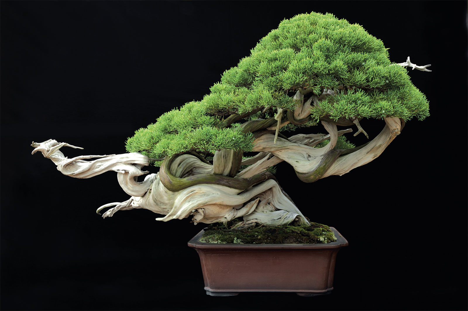 Tiny Trees The Art Of Bonsai In Omiya Koen Wiring Time