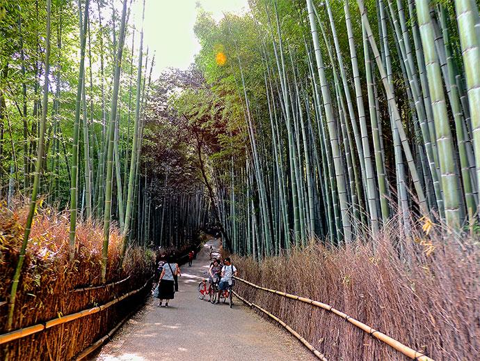 arashiyama_bamboo_forest