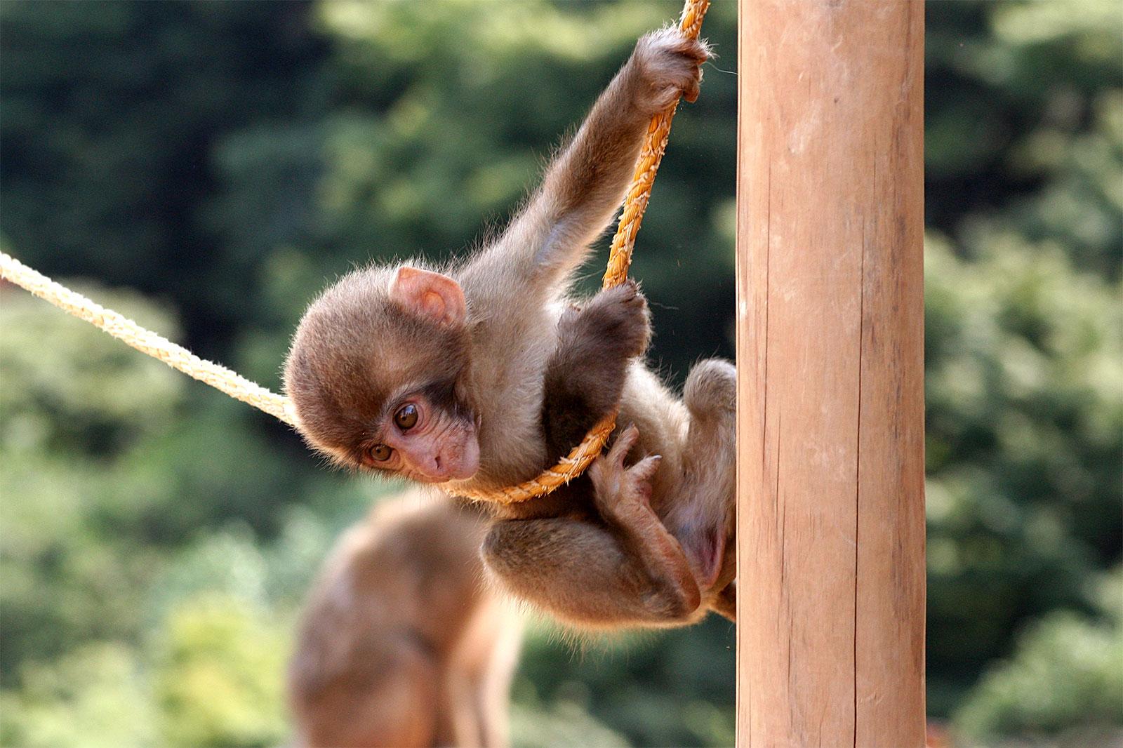 4 Reasons To Visit The Iwatayama Monkey Park
