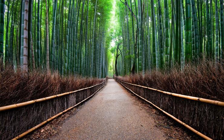 kyoto_bamboo