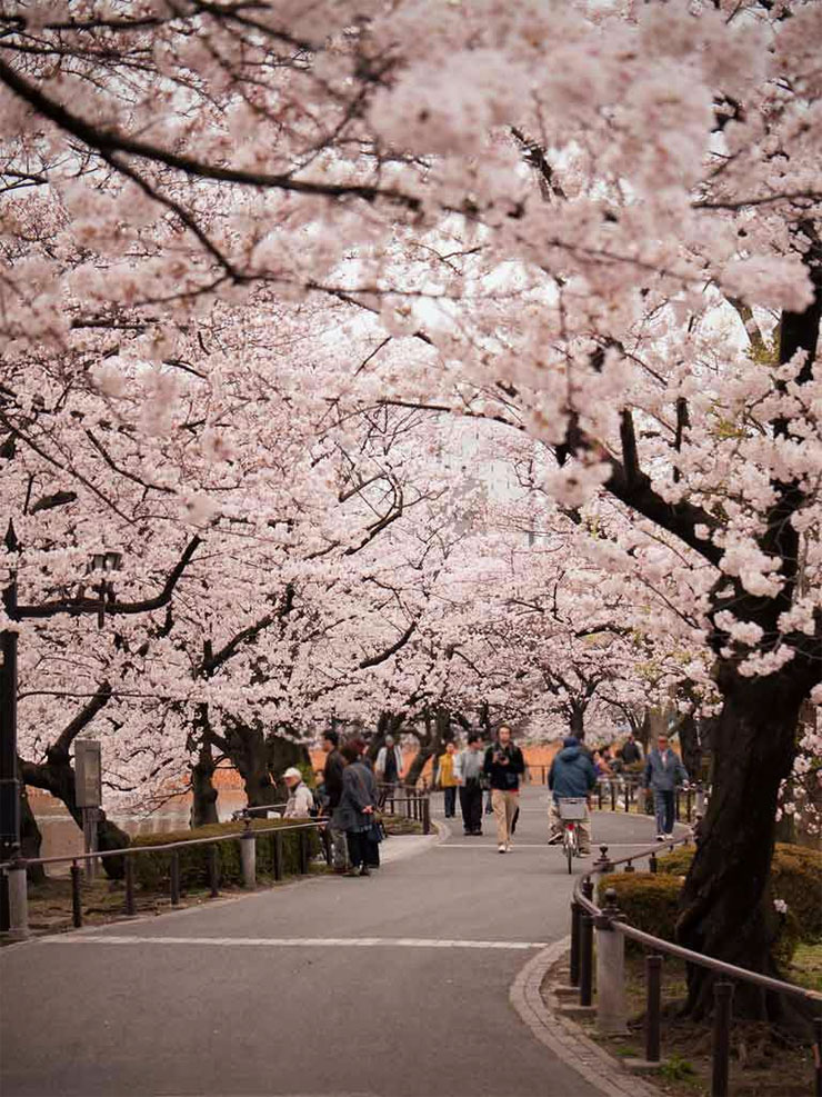 ueno_flowers