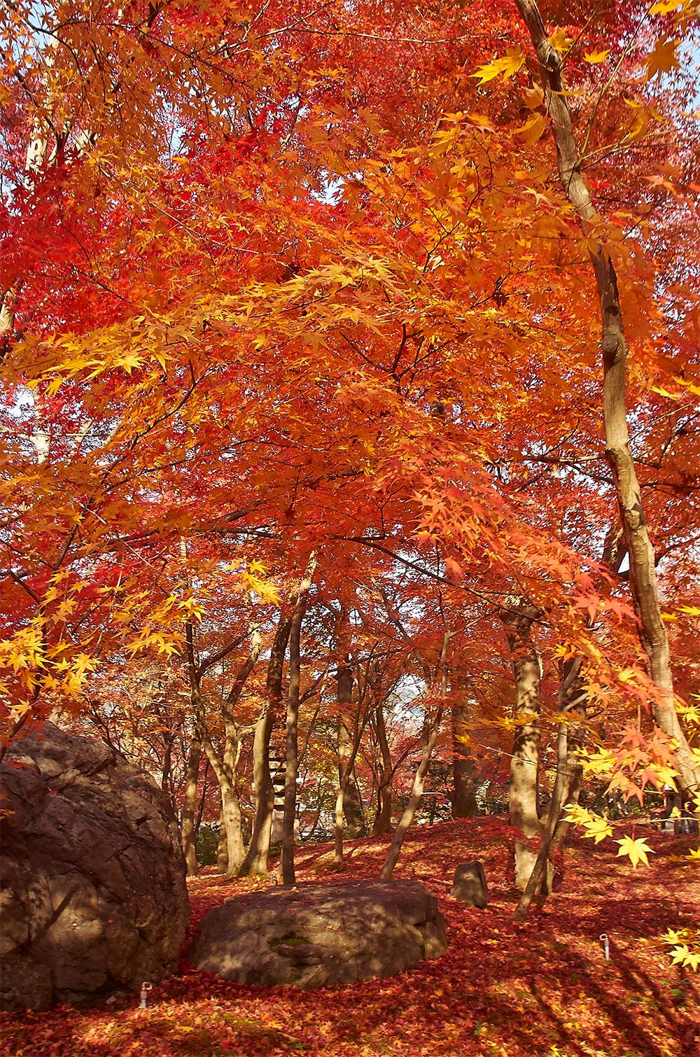 kyoto-autumn-2
