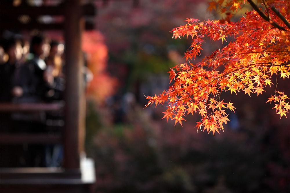 kyoto-autumn-4