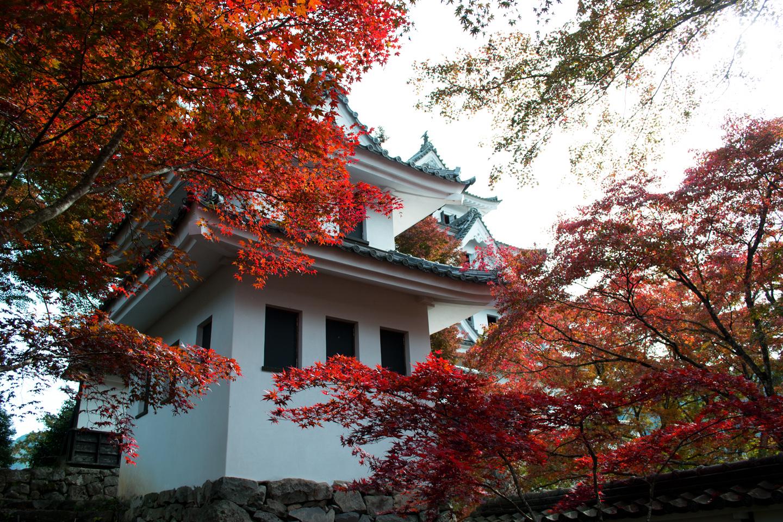 gujo_hachima_castle_3