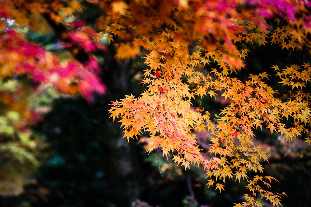 kyoto-colors