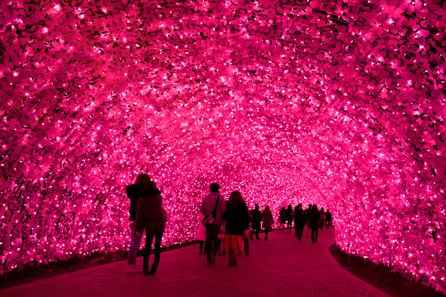 Kawazu-Sakura-Light-Tunnel