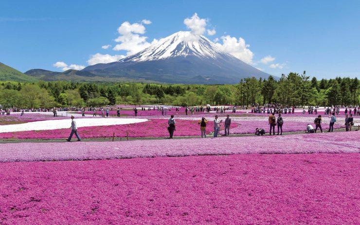 Fuji Shibazakura Festival 2016 Lead Image