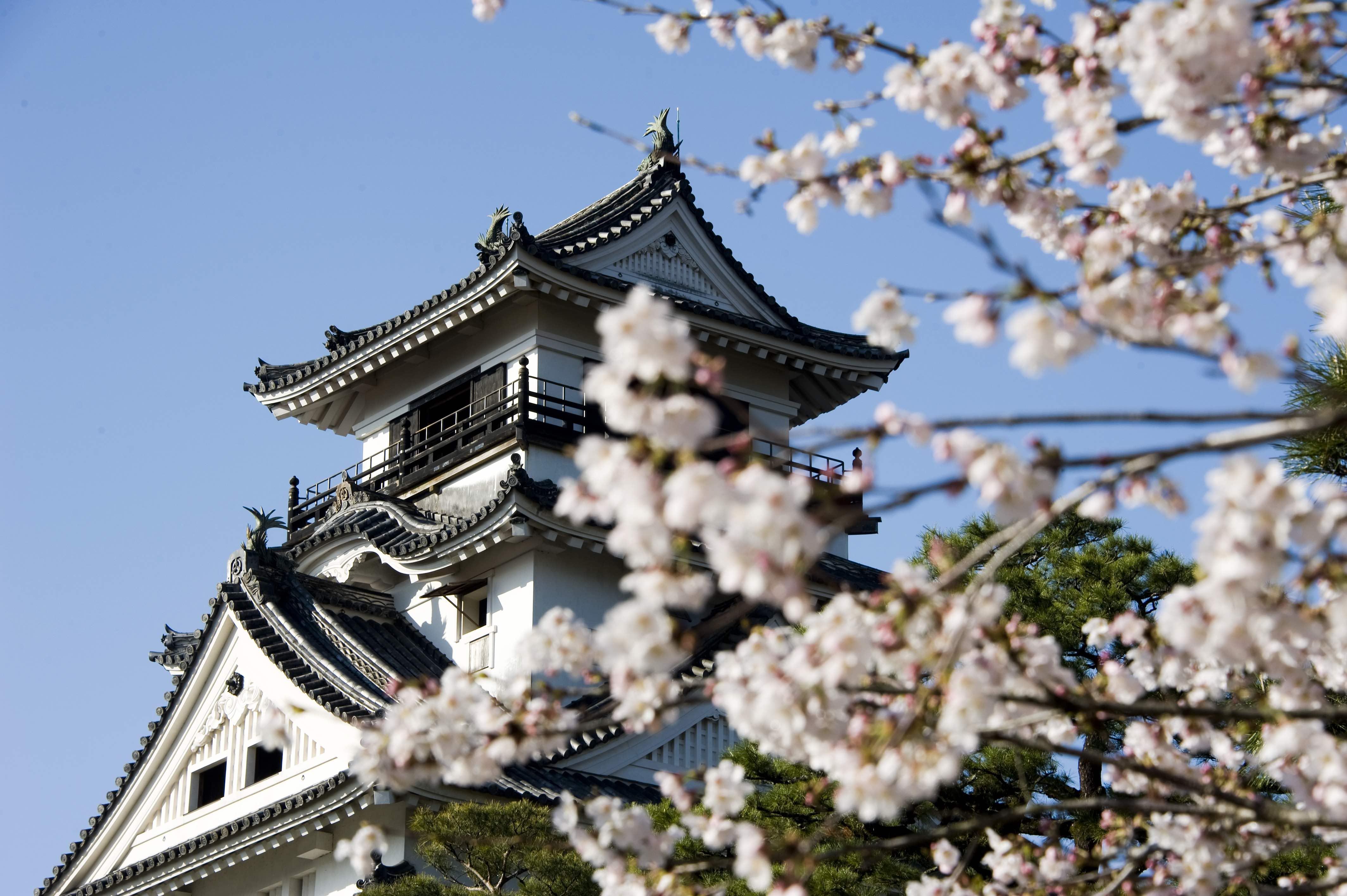 kochi-castle