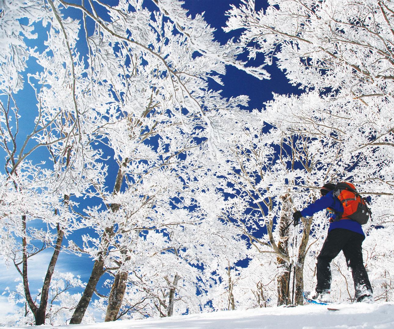 Japan Winter Adventures Start Here