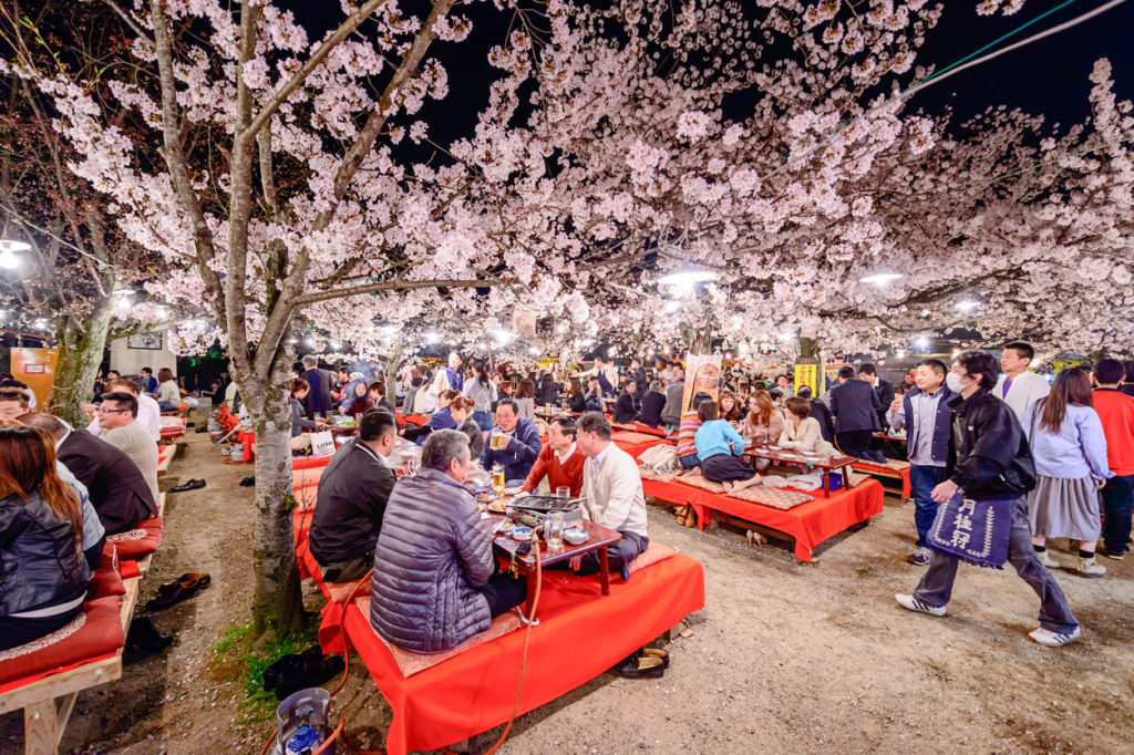 A hanami spot in Kyoto.