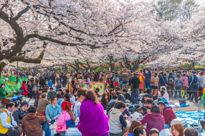 Is Hanami in Japan Actually All That Fun?