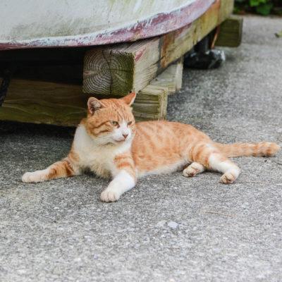 Cat Island Oita cat