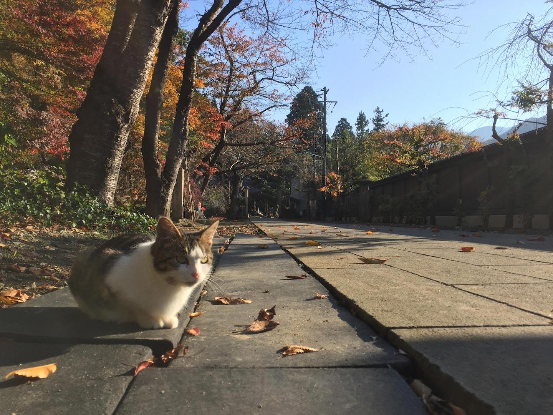Cat in Sakunami Onsen