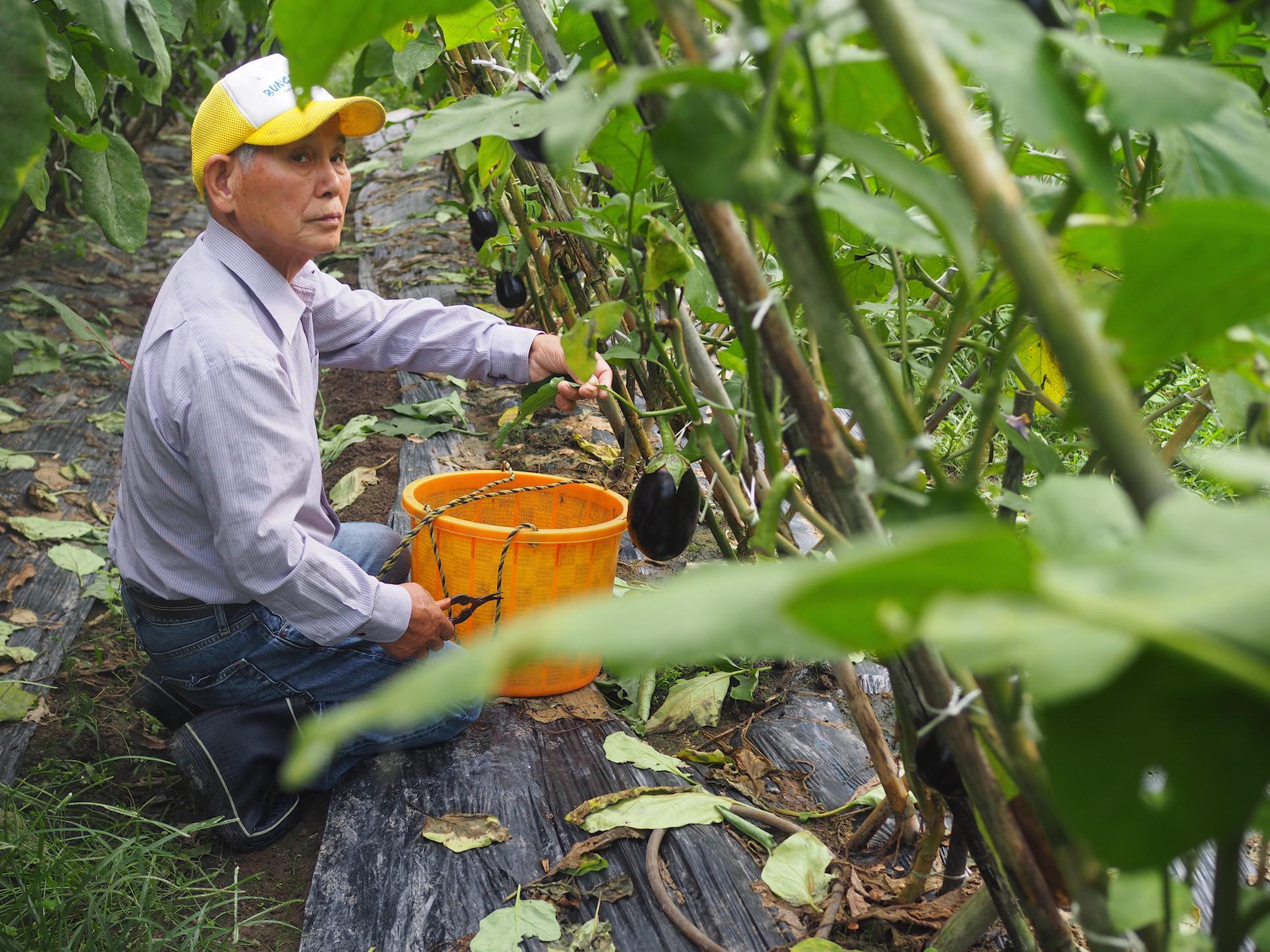 Konos Farm Bungotakada