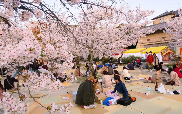 Hanami in Yasaka