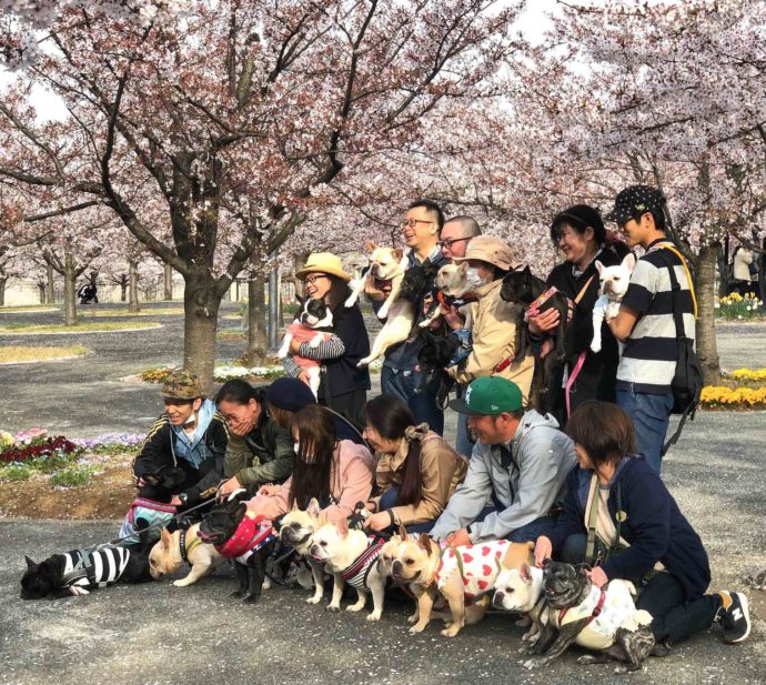 20 Images that Prove Cherry Blossoms in Japan Make Life Worth Living