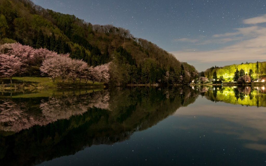 Cherry blossoms reflected on the lake.