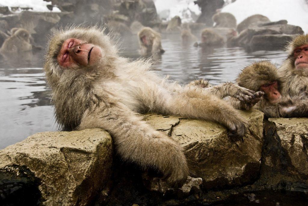 Nagano monkeys ISI Nagano