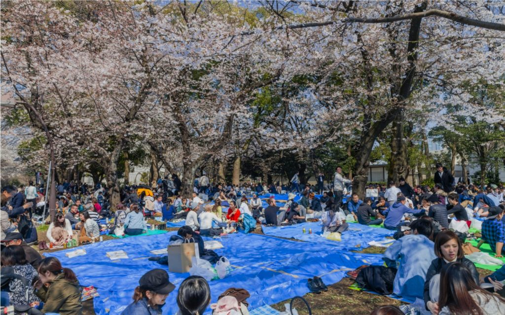 Cherry Blossom Season has Officially Started in Tokyo