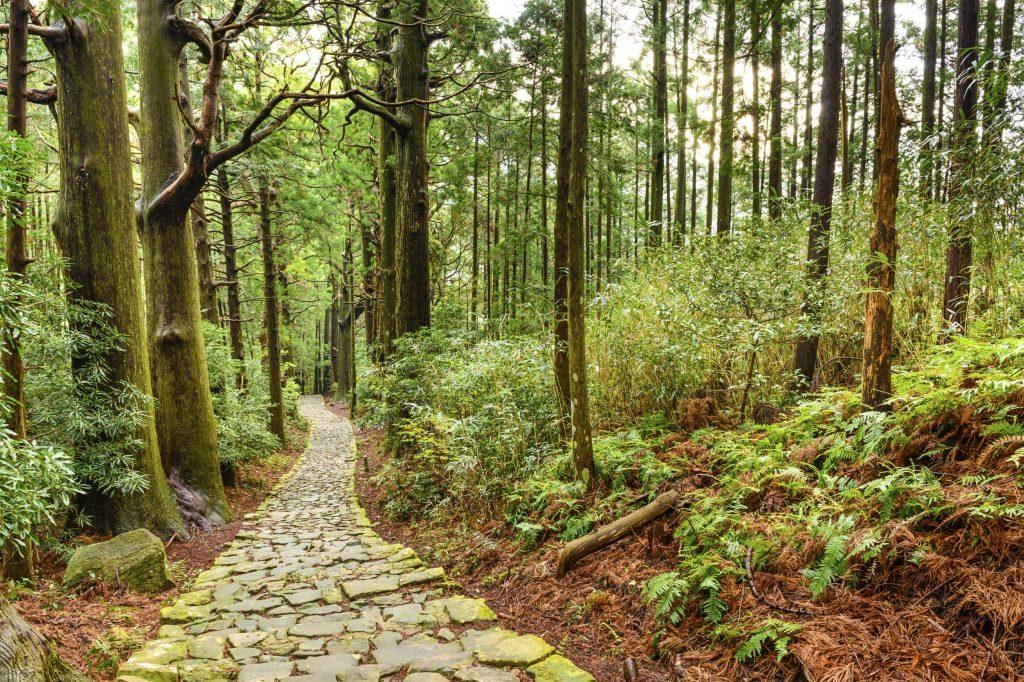 Follow the sacred Kumano Kodo in Wakayama prefecture