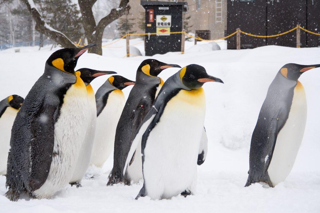 Long Island Zoo Penguins