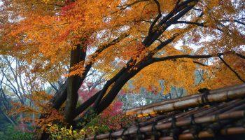 Autumn leaves in a garden Japan