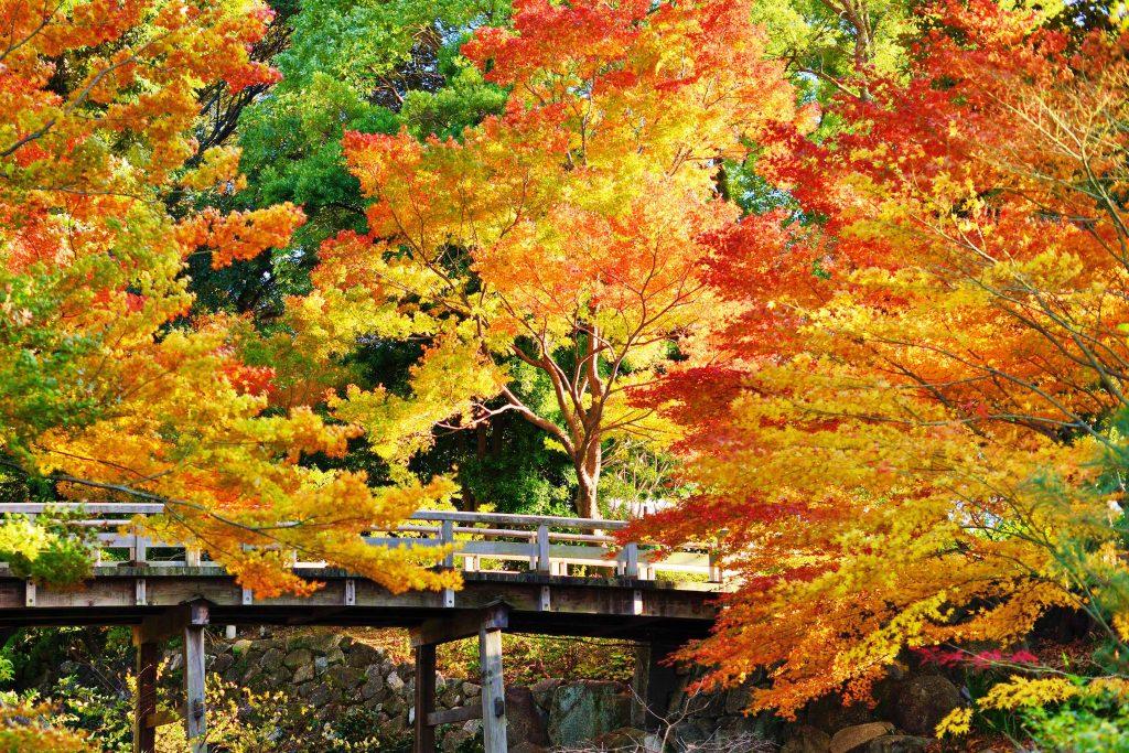 Autumn leaves at Tokugawa gardens Nagoya