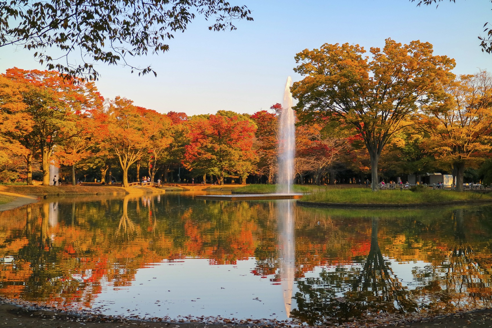 Image result for yoyogi park
