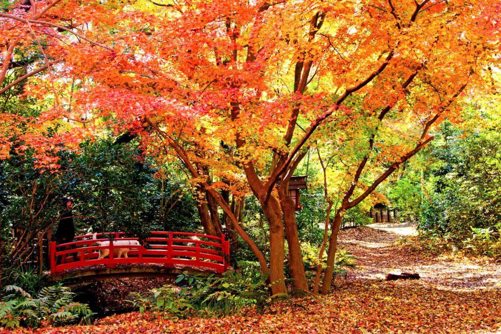 Todoroki Valley autumn